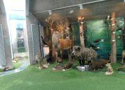 Muzeum przyrody_10