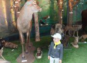Muzeum przyrody_2