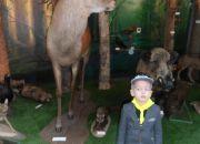 Muzeum przyrody_3