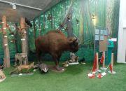 Muzeum przyrody_9