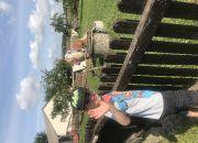 Wizyta na wsi